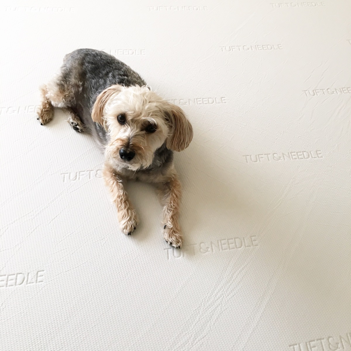 Our Tuft & Needle Mattress Review